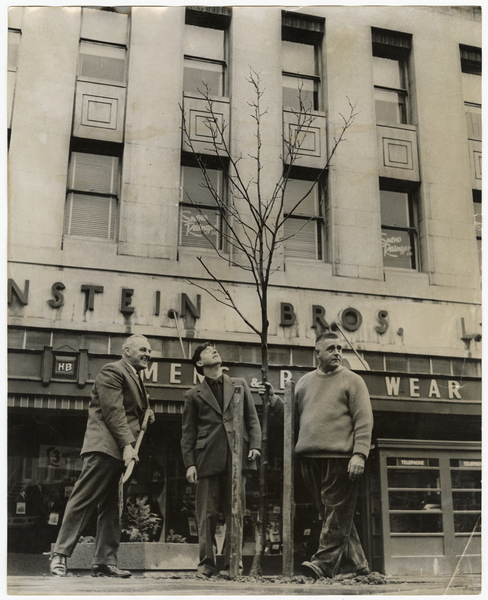 Tree planting outside Hallensteins store