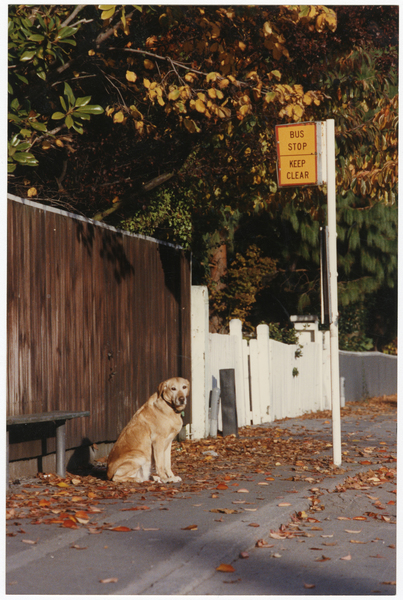 Dog at bus stop