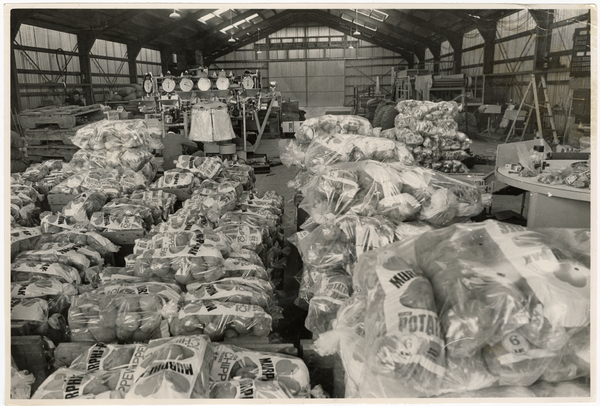 Bags of potatoes at Fresh Vegetable Packers Ltd, Belfast