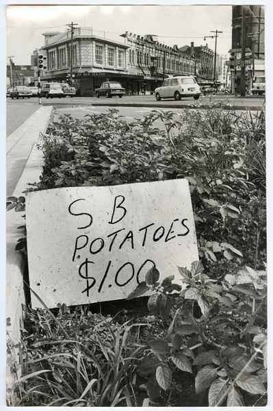 Potato patch, intersection of Ferry Road and St Asaph Street