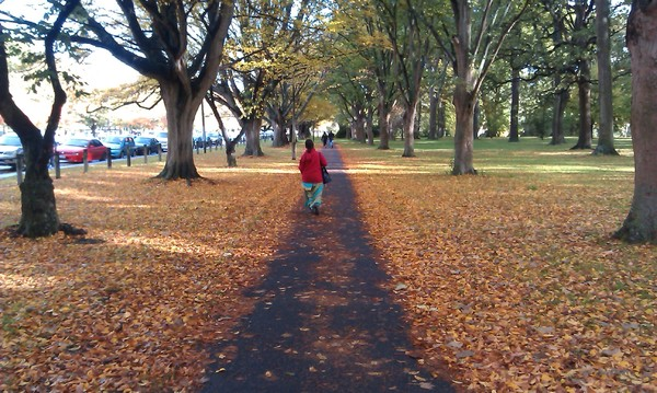 Autumn scenery in Hagley Park