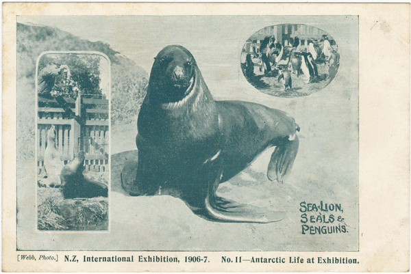 N.Z International Exhibition 1906-7. No. 11 - Antartic Life at Exhibition.