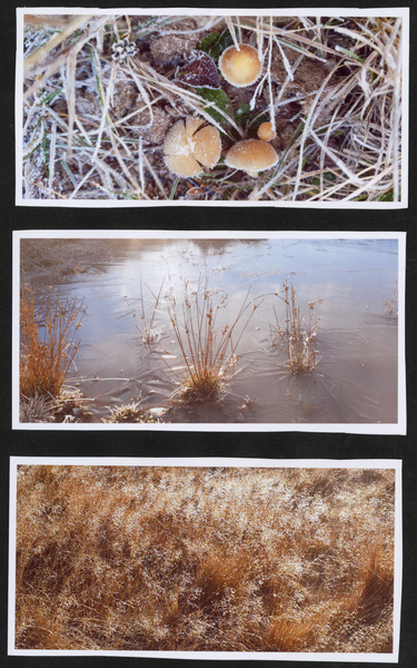 3 images of grasses and mushrooms