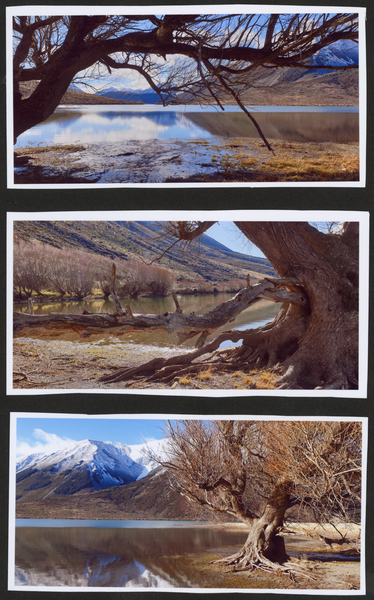 3 photos of Tree by Lake Pearson