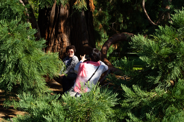 A photo in the trees, Botanic Gardens