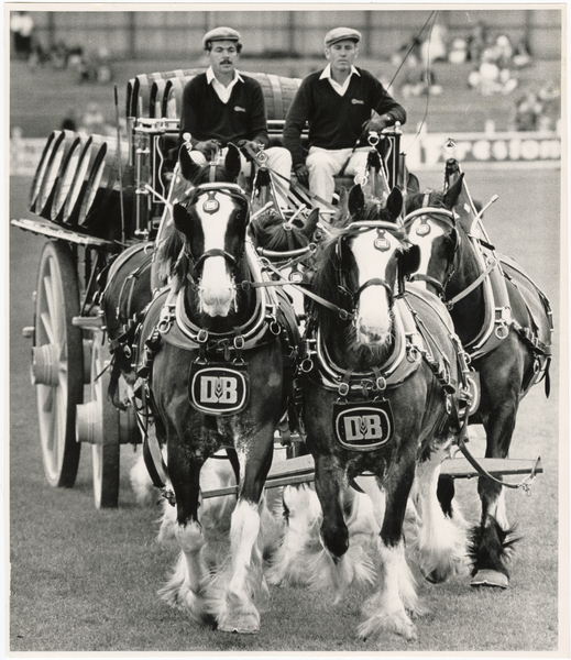 Clydesdale team at A and P show