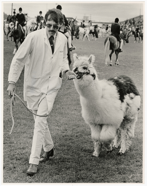 Chris Buckley with alpaca