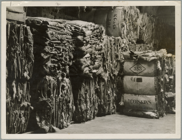 Bales of deer skins