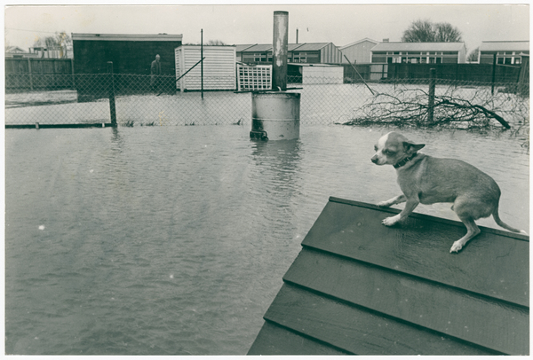 Image of A flooded Hobson street property
