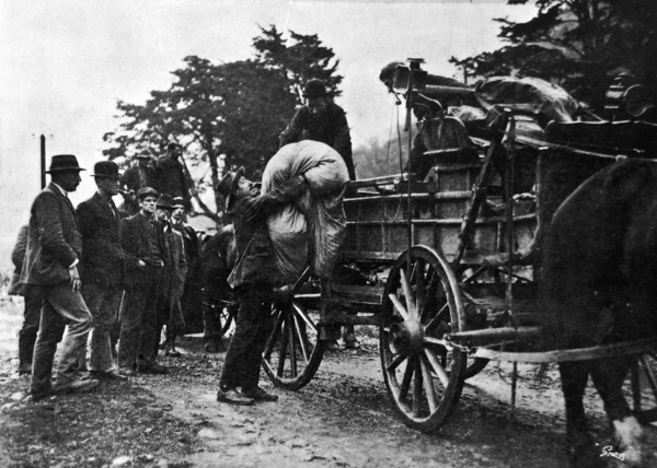 Mr J. Toy arranging the carts for the wounded