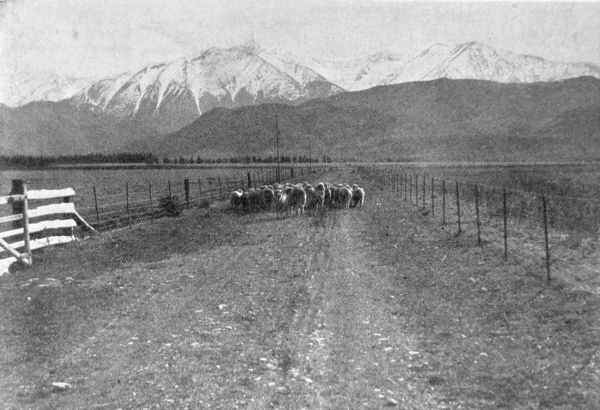 Mount Torlesse, a well-known Canterbury sheep station