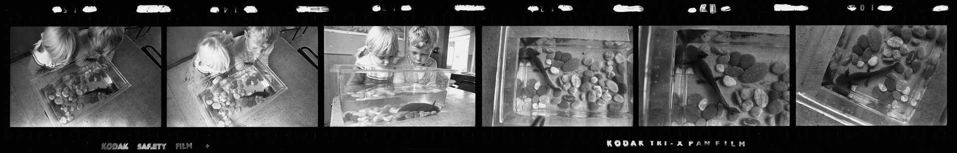 Negative strip from the Christchurch Star Archive showing Aristotle the Axolotl and children at Riccarton Kindergarten