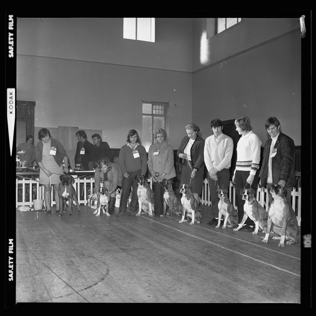 Negative from the Christchurch Star Archive showing Boxer Dog Show