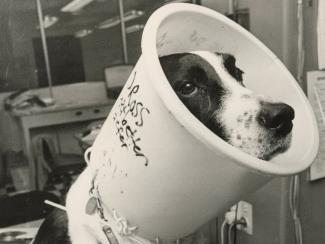 Image of dog with improvised cone